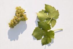 White wine grapes, variety 'Muskat-Ottonel'