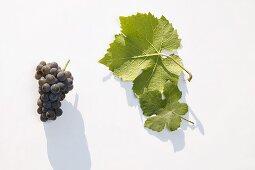 White wine grapes, variety 'Ruländer'