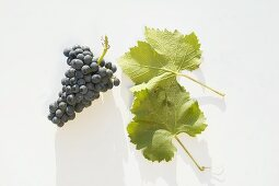 Red wine grapes, variety 'St. Laurent'