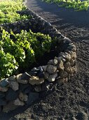 A stone wall dividing vineyards, Lanzarote