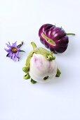 Aubergines (cultivars: Rotonda Bianca Sfumata and Big Purple)