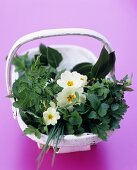 Basket of herbs and primroses