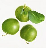 Three greengages against white background