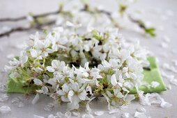A wreath of cherry blossom