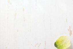A savoy cabbage leaf