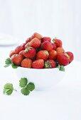 Fresh strawberries in white basin