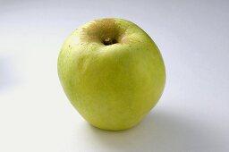 'Gelber Richard' apple