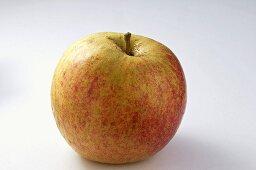 'Holländer Prinz' apple