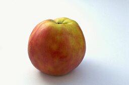 'Roter Grafensteiner' apple