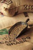 Coffee beans in scoop on jute sack