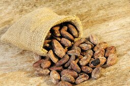 Cocoa beans in and in front of jute sack