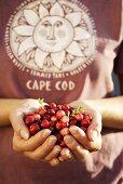 Hands holding fresh cranberries