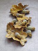 Acorns and dry oak leaves