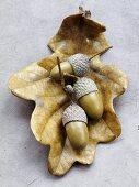 Acorns on dry oak leaf