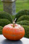 Pumpkin on garden table (France)