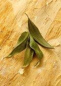 Zitronenmyrte (Backhousia citriodora, Australien)