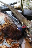 A pheasant with a weapon and a hunting bugle