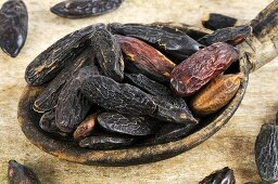Tonka beans in a wooden spoon