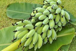 Bunch of unripe bananas
