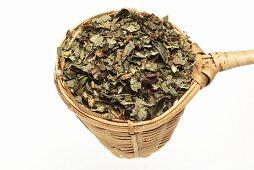 Dried asarabacca leaves (Asarum europaeum) in tea strainer