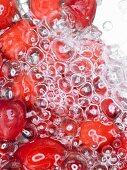 Cranberries under water