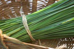 Lemon grass in a basket