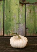 White pumpkin (variety: Baby Boo)