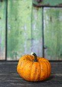Pumpkin (variety: Jack be Little)