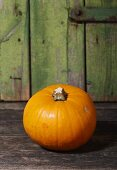 Pumpkin (variety: Baby Bear)