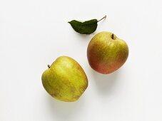 Two apples (variety: Boskop)