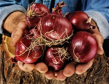 Man holding red onions in both hands over a tree trunk