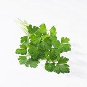 Flat leafed parsley (Petroselinum sativum)
