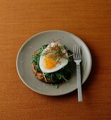 Potato pancakes with spinach and fried egg