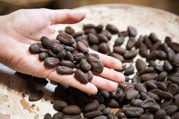 Cocoa beans in someone's hand, Mexico