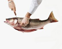 Removing the Head from a Whole Uncooked Sea Bass