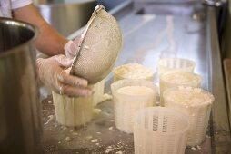 Making Halloumi Cheese; Cyprus