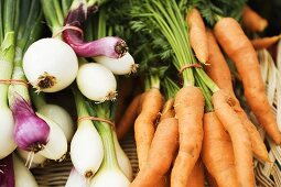 Organic Onions and Carrots in Basket