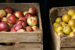Assorted Fresh Picked Apples in Crates