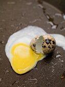 Fried quail's egg in frying pan