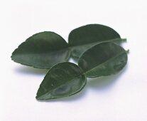 Four Kaffir Lime Leaves