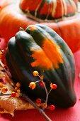 Autumn squash still life with acorn squash