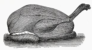 Capon (Illustration)