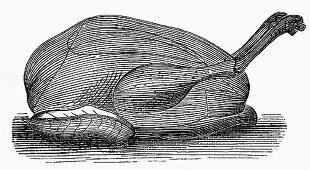 Capon (Illustration)