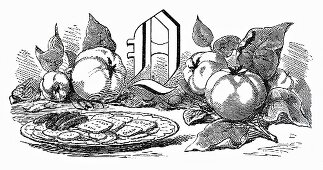 Still life with letter Q and quinces (Illustration)