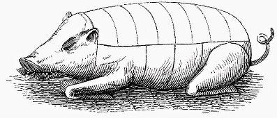 Suckling pig (Illustration)