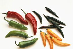 Various fresh chili peppers