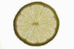 Slice of lime, backlit