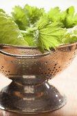 Freshly washed salad leaves in colander