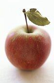 Elstar apple with leaf