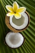 Coconut with plumeria on palm leaf